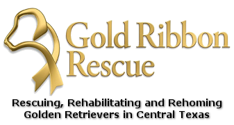 Welcome | Gold Ribbon Rescue
