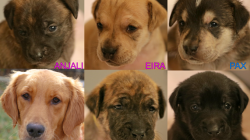 Gold Ribbon Rescue Dogs For Adoption